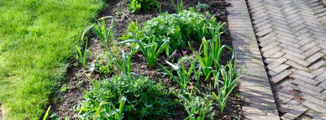 front-garden-path-early-april-121